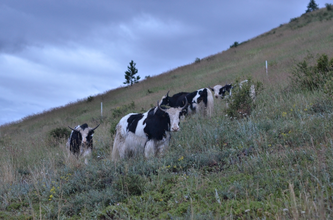 pbf_starter-herd
